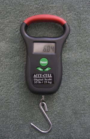 Accu Cull Digital Scale Review